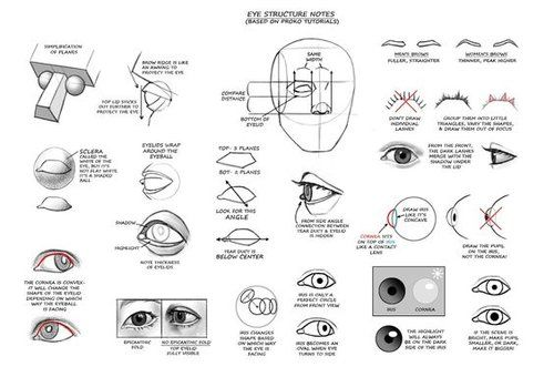 Character Anatomy