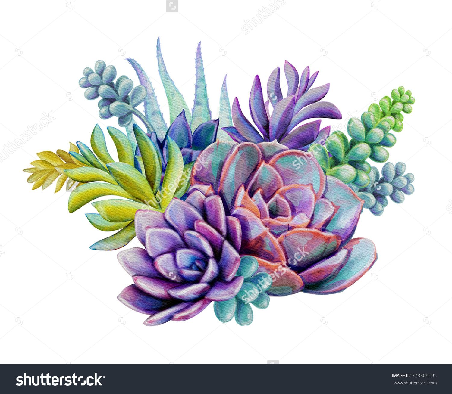 Watercolor Succulent Plants Composition Floral Bouquet Illustration Isolated On White Background