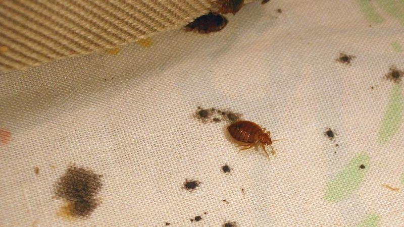 727c0d27feb51a08231224f087cdefb8 - How To Get Bugs Out Of Your Room At Night