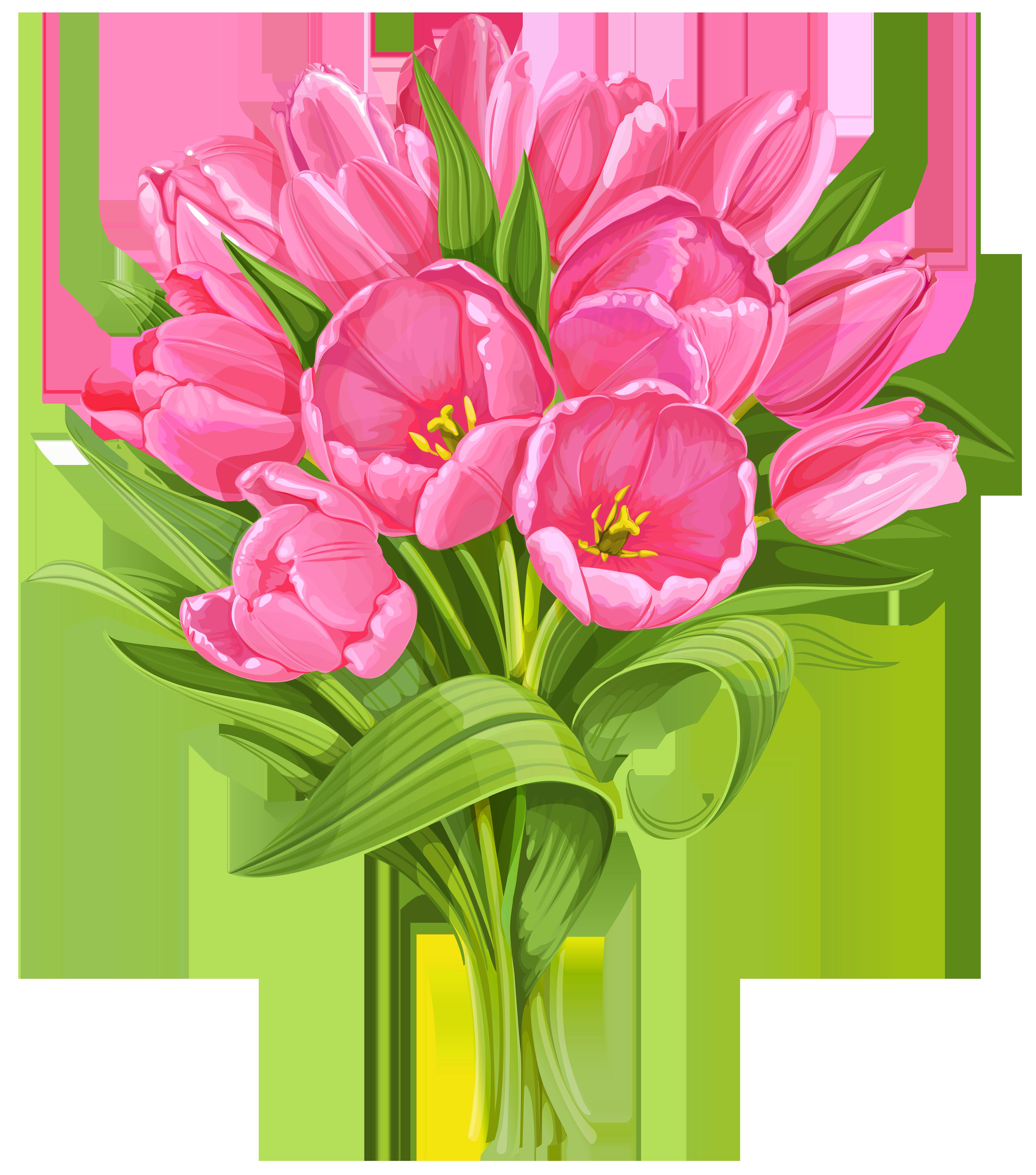 tulip clipart no background 8 Flower clipart, Tulip