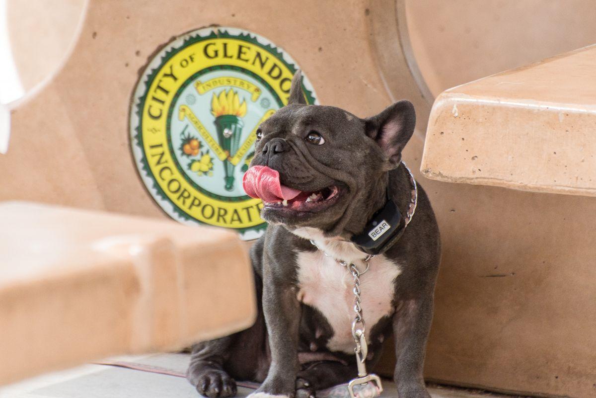 That S Some Tongue Sit Means Sit Dog Training San Gabriel