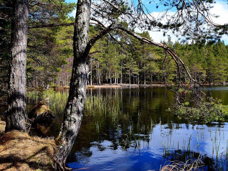 Lake In Lapland Finland xHD Wallpaper on MobDecor