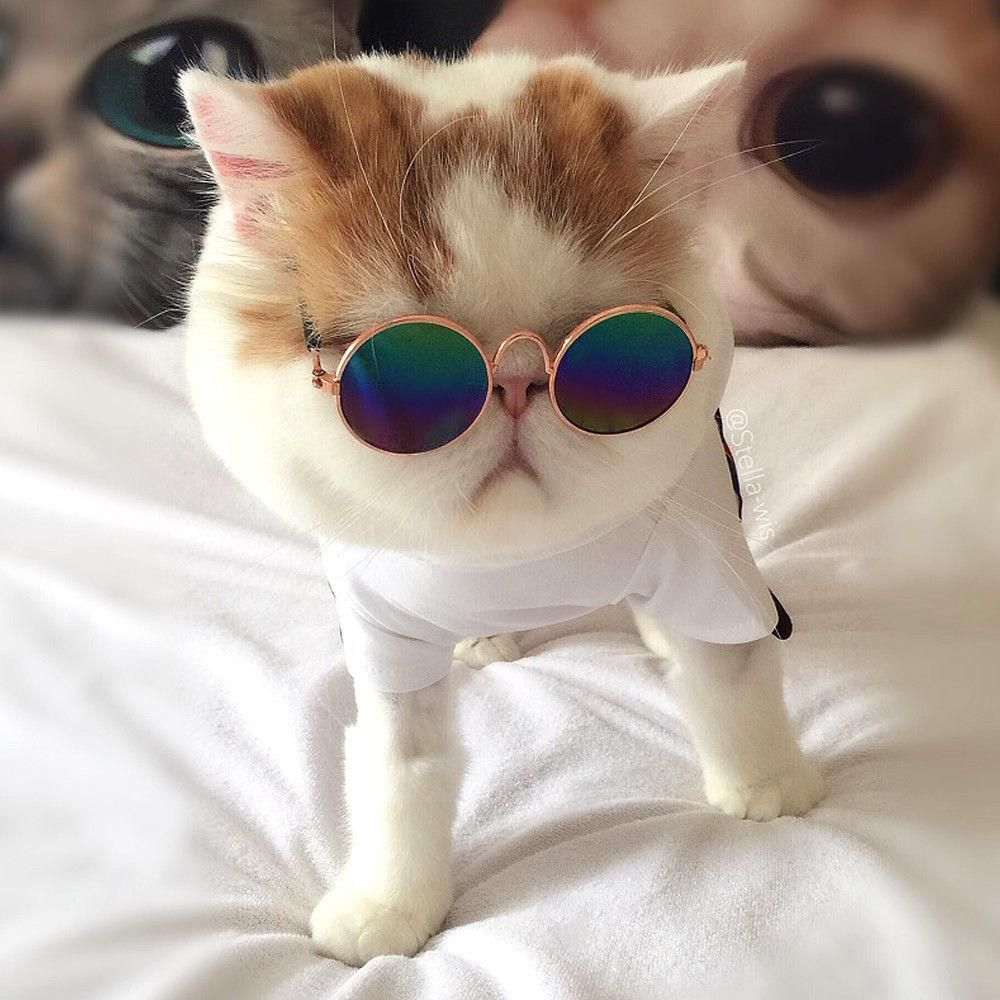 Pet Round Sunglasses Small Pet Pet Sunglasses Cat Sunglasses Cat Fashion