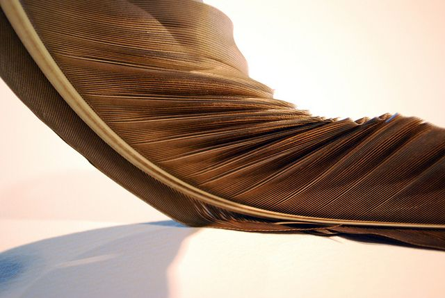 Marchi Wierson > feather study