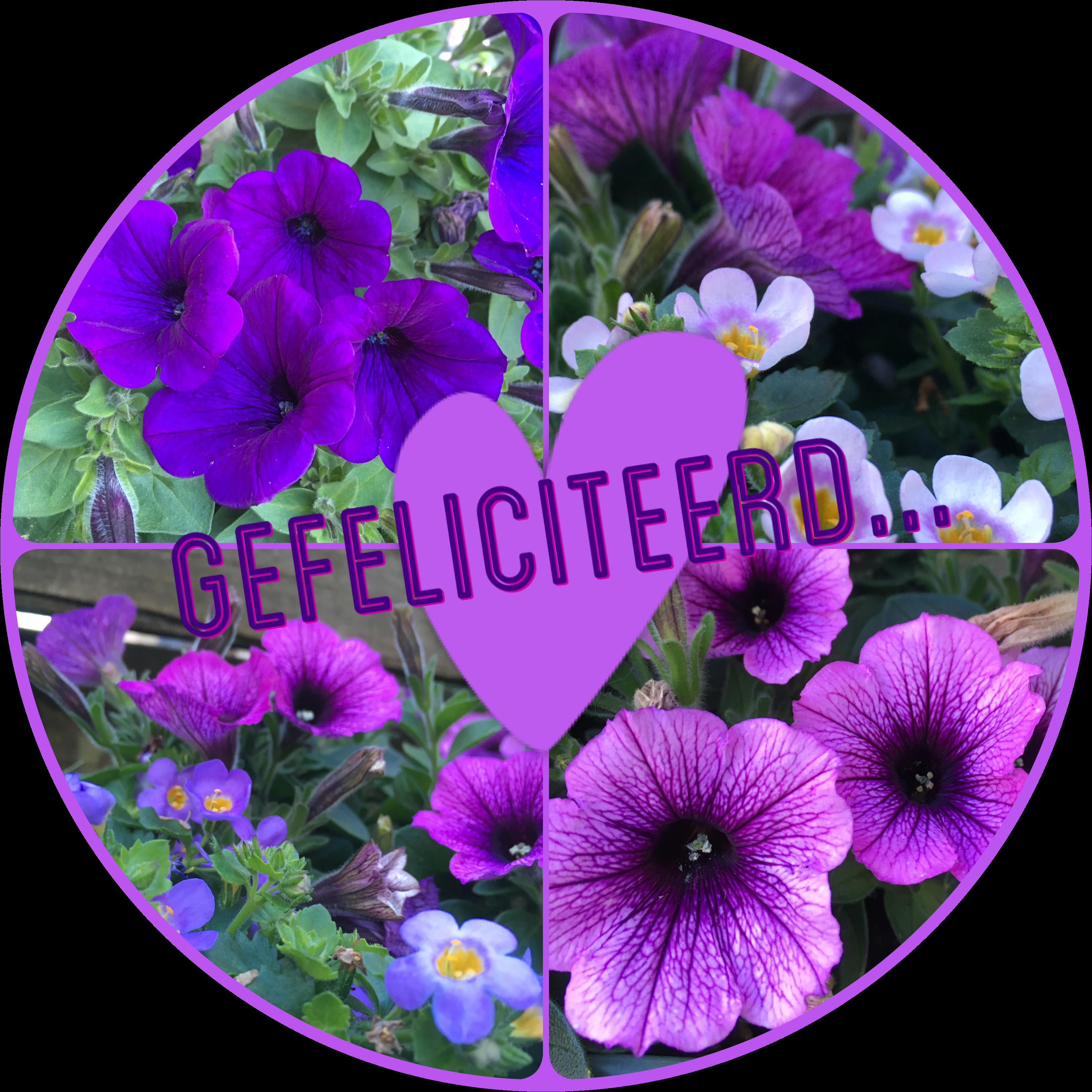 Gefeliciteerd kaart paarse bloemen