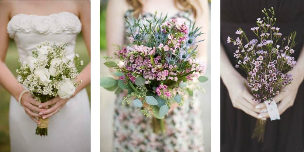 Wax Flower Is A Colorful And Cost Effective Alternative To Babies Breath Wax Flower Arrangements Garden Wedding Ideas On A Budget Wax Flowers White Wax Flower