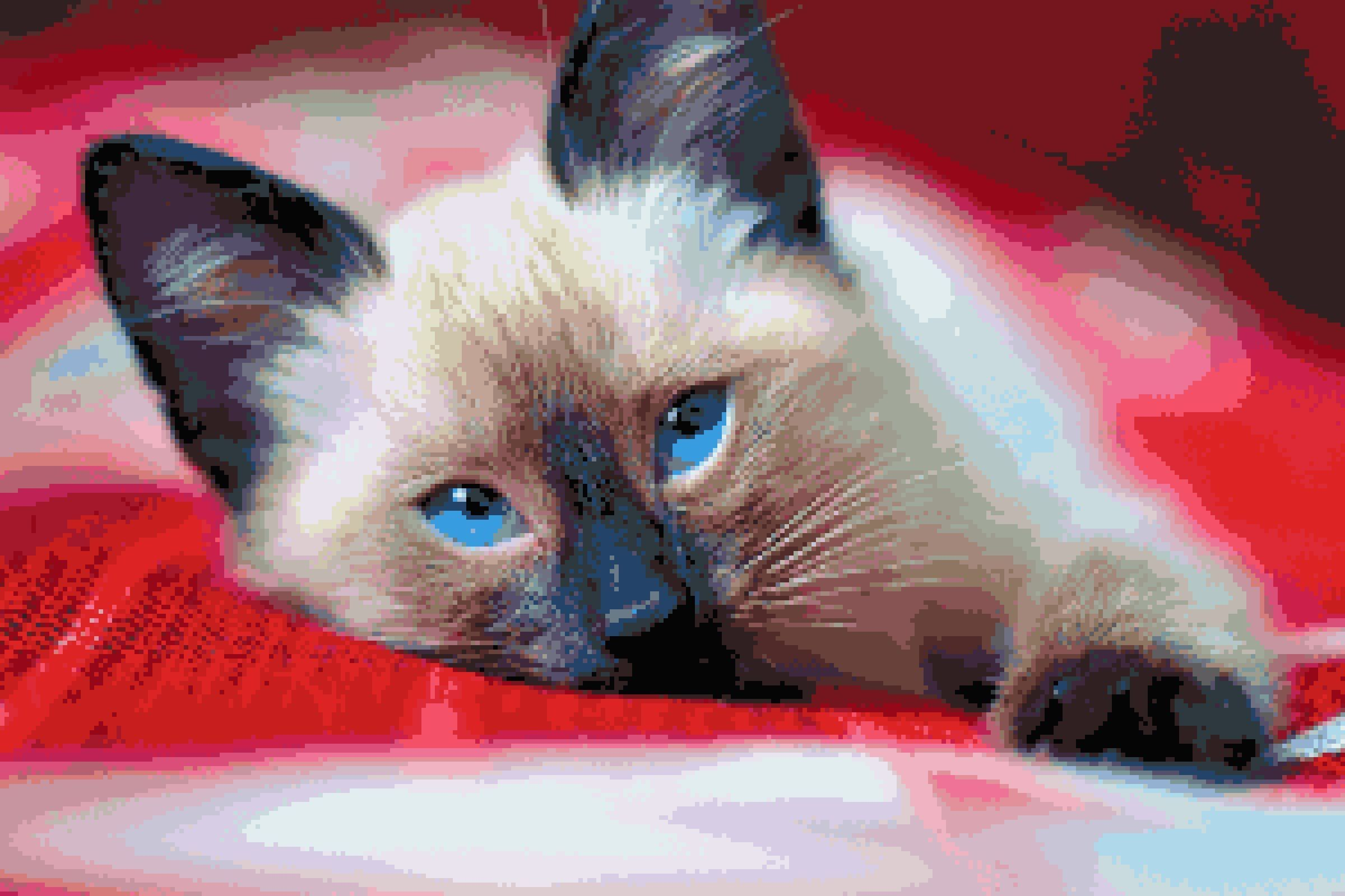 Sleepy Siamese Kitten Pets Cats And Kittens Inspired Etsy Siamese Kittens Kittens Cats And Kittens
