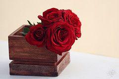 صور ورد جوري جديدة 2015 اجمل الورود بكل الالوان احمر اصفر بنفسجي ابيض Rosa Damascena Beautiful Flowers Red Roses Flowers