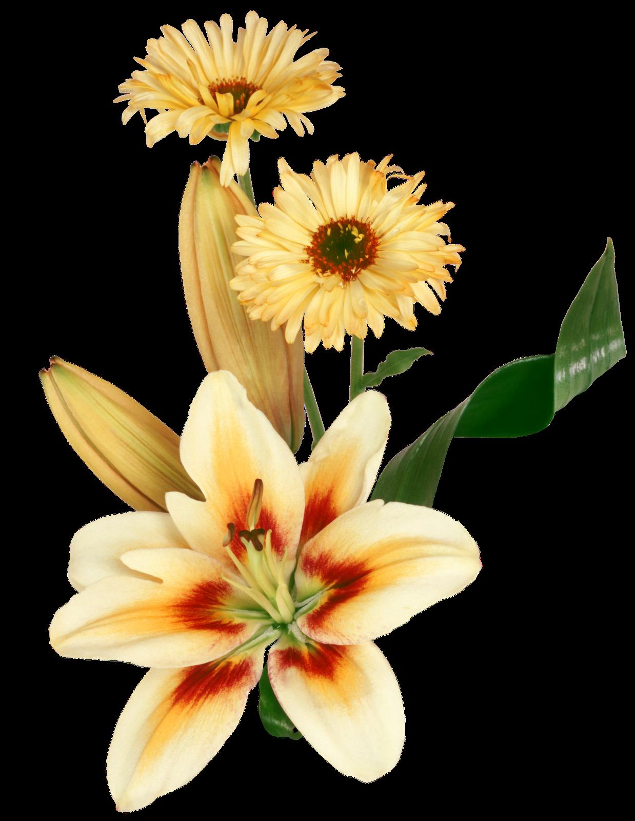 Pin De Anarh En Tatuajes Pinterest Mariposas Png Flores Y