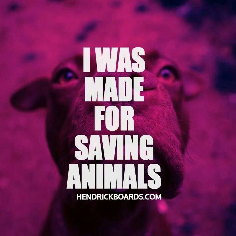 I was made for saving animals