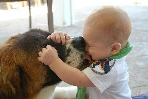 Картинки по запросу funniest animals and child