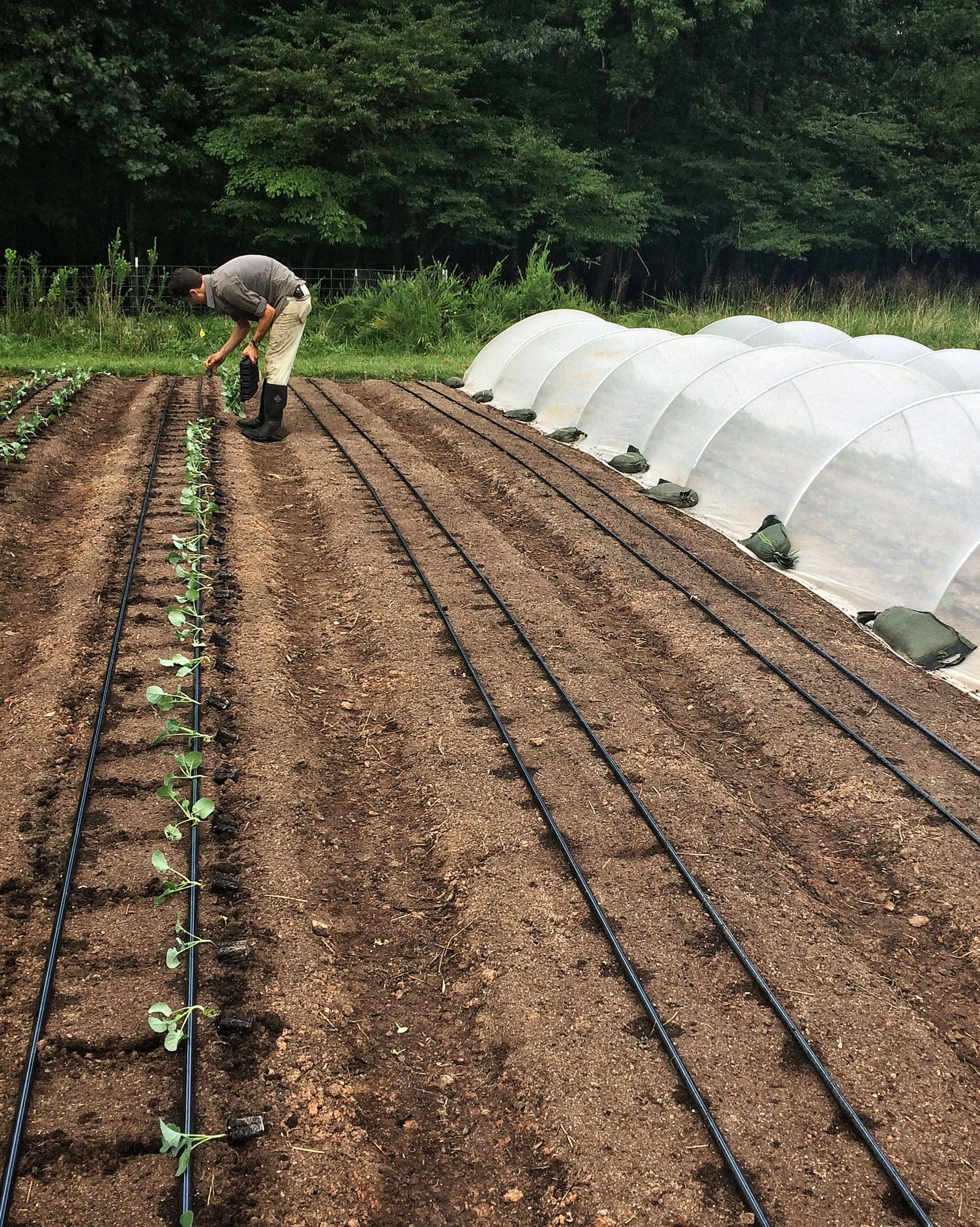 The Farm Hustle: Trying to Earn a Living as a Farmer | If you want to make a different in the future of farming and food, this is how important supporting farmers' markets, farm stands, and CSAs are.    #farmersmarket #gardening #marthastewart #shoplocal