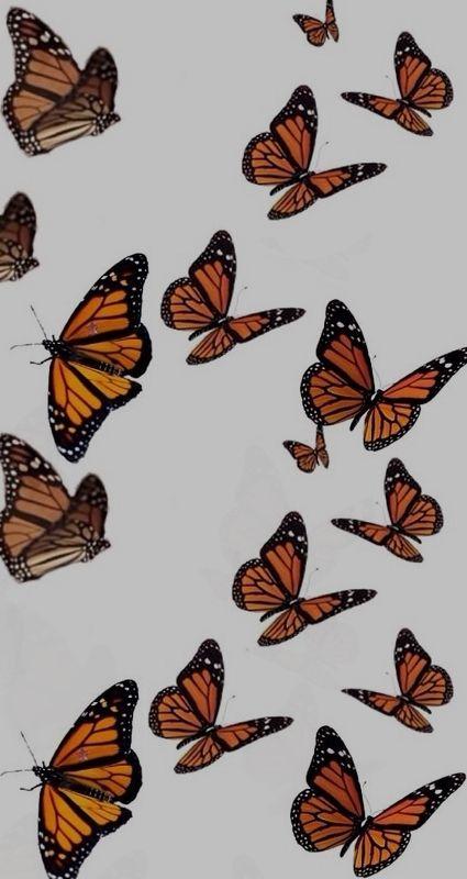Butterfly wallpaper lockscreen aesthetic trendy vsco ...