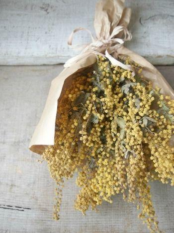 Yellow Sage