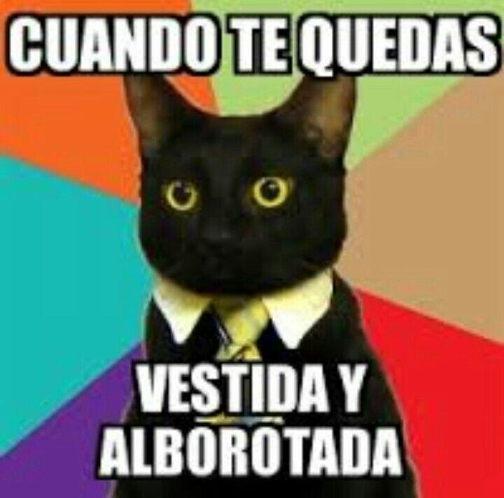 Vestida Y Alborotada Business Cat Business Cat Meme Cats