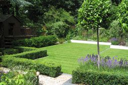 Bay standards planted within box edged beds and lavender Or they