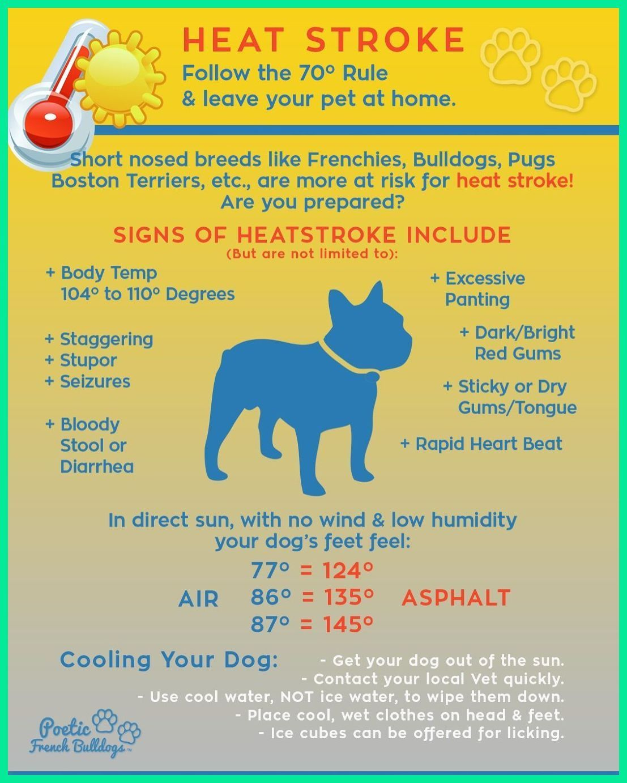 English Bulldog Training Problems English Bulldog Puppies Blue Merle English Bulldog Pupp In 2020 English Bulldog Puppies Bulldog French Bulldog Facts