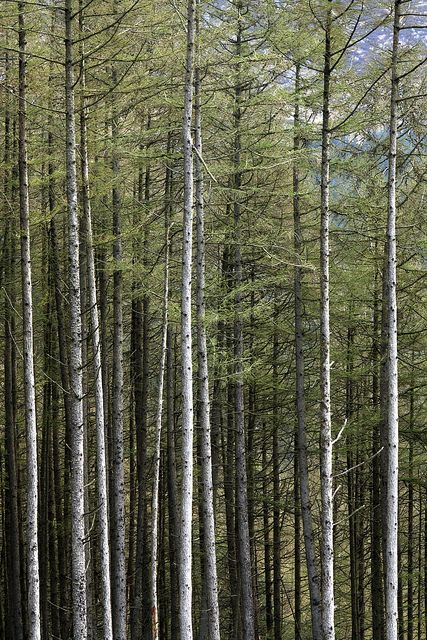 A Galloway Forest   by jillyspoon