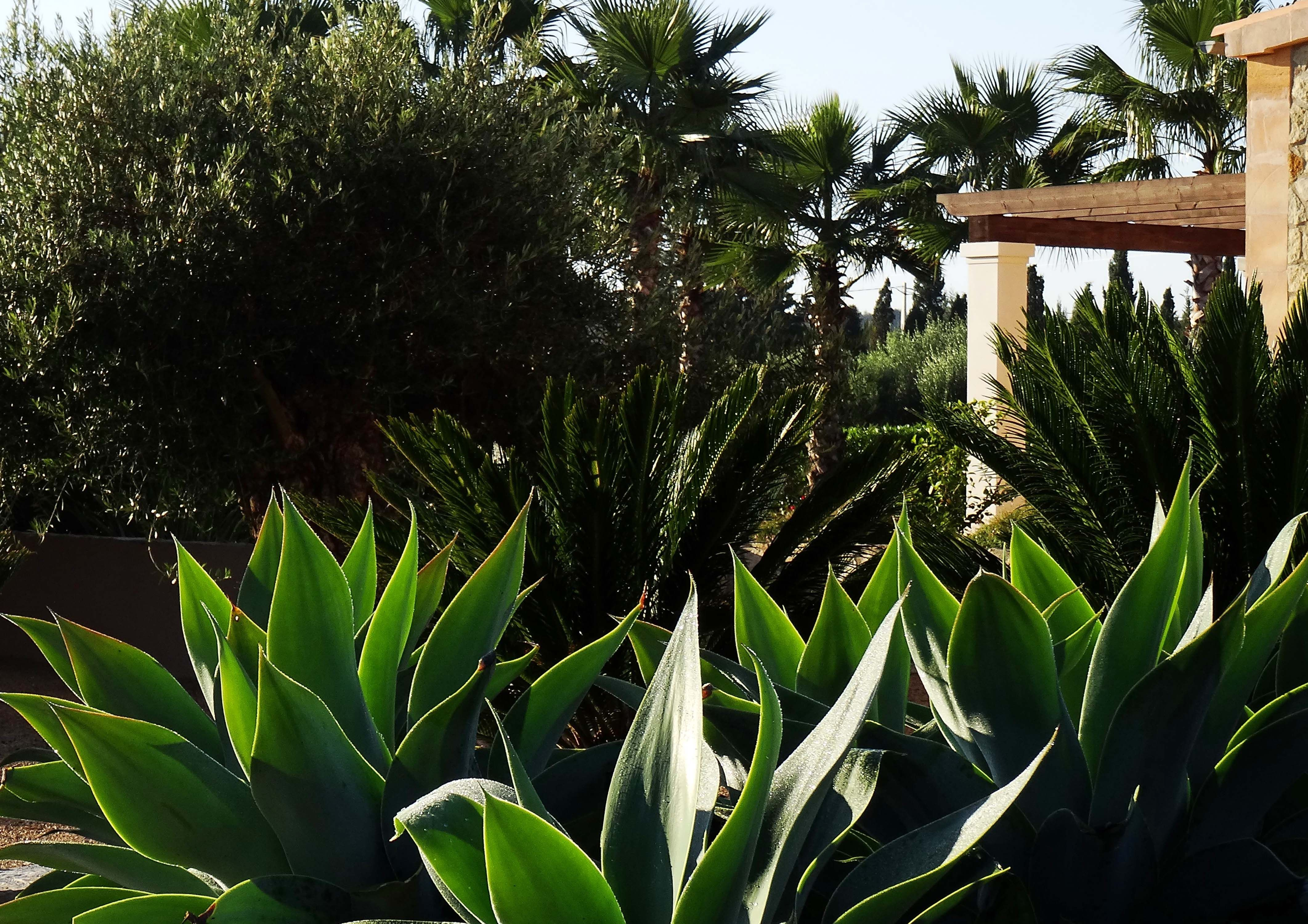 Sub tropical planting- cycads, agaves and washingtonia. All hardy in the mediterranean climate.