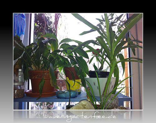 Meine Pflanzen am Küchenfenster (2012, vor der Sanierung)