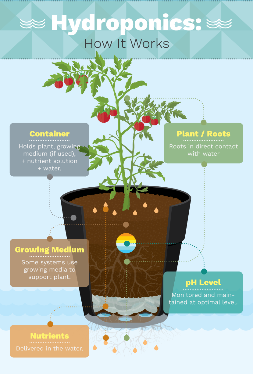 Growing Food Indoors with Hydroponic Gardening ...