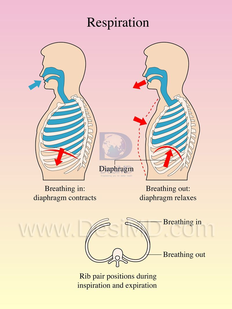 Health Fact 20, Normal respiration is a quiet affair and