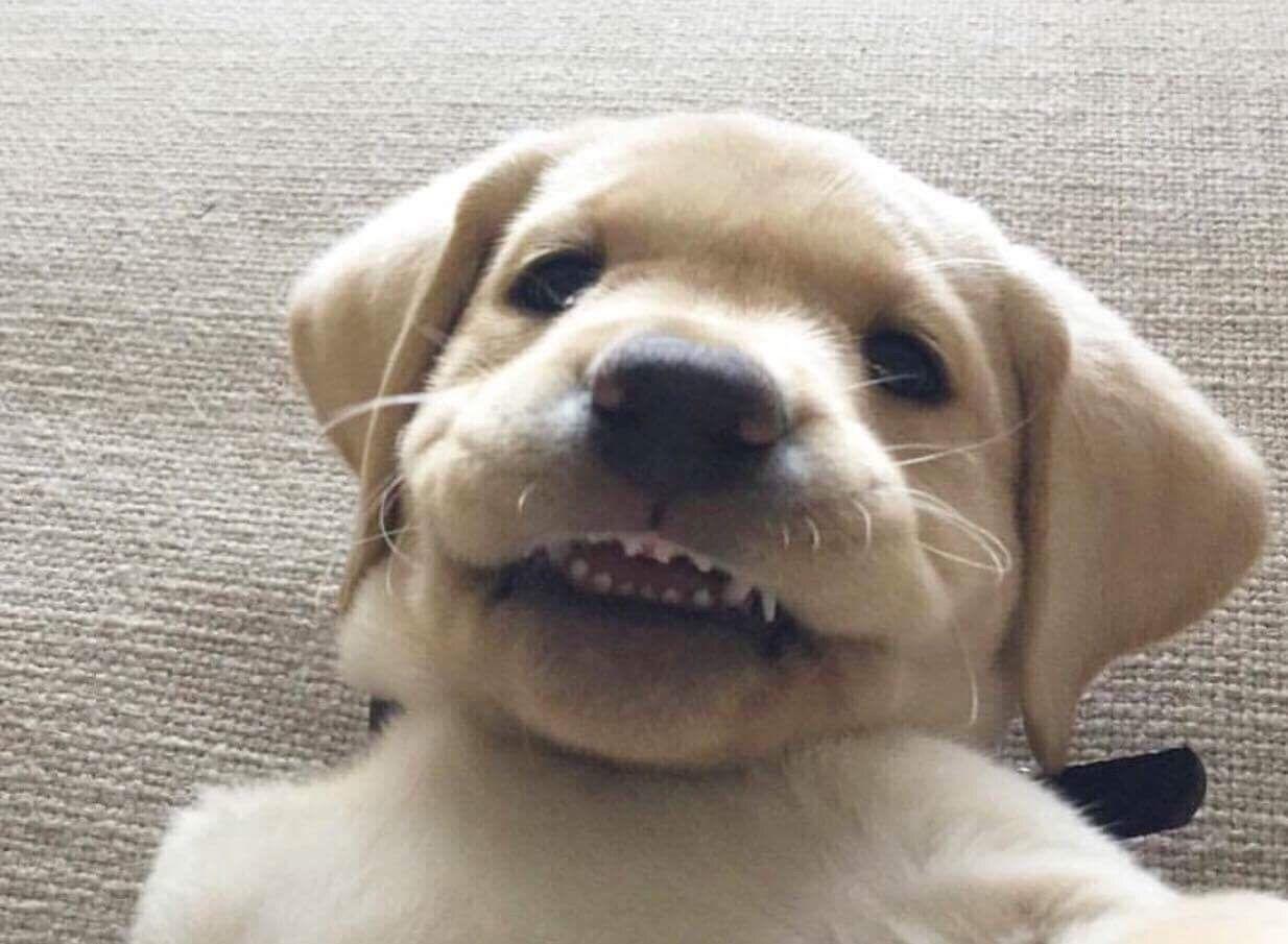 Pupper selfies http://ift.tt/2eLsido