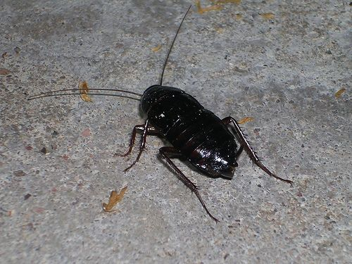 What Are Water Bugs Ehow What Is Water Insect Spray Bugs
