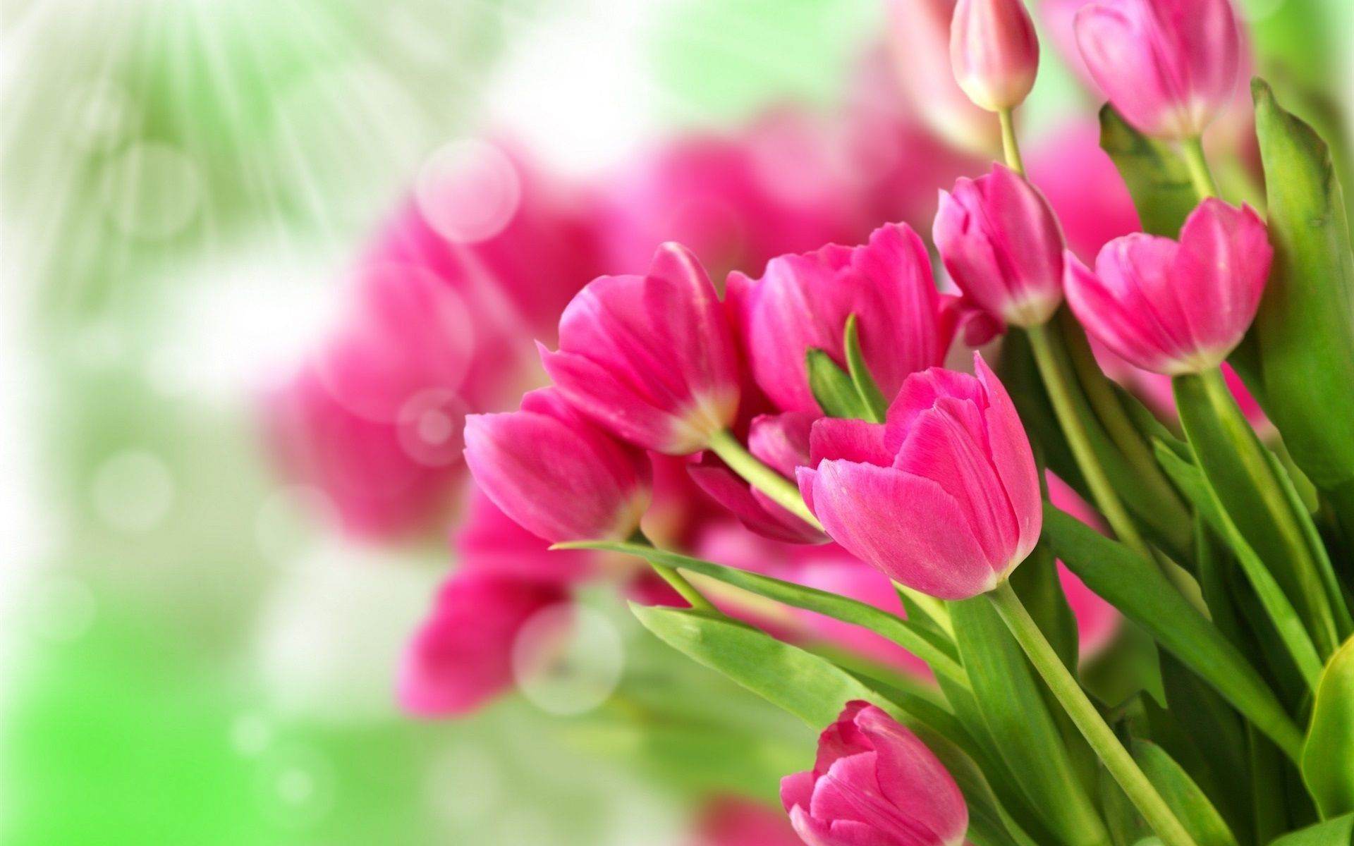 花束ピンクの花 チューリップ 日光 壁紙 1920x1200 ピンクの