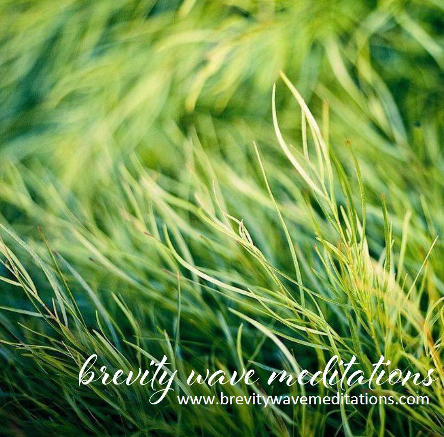 #EARTHING #BREVITYWAVE http://www.brevitywavemeditations.com/