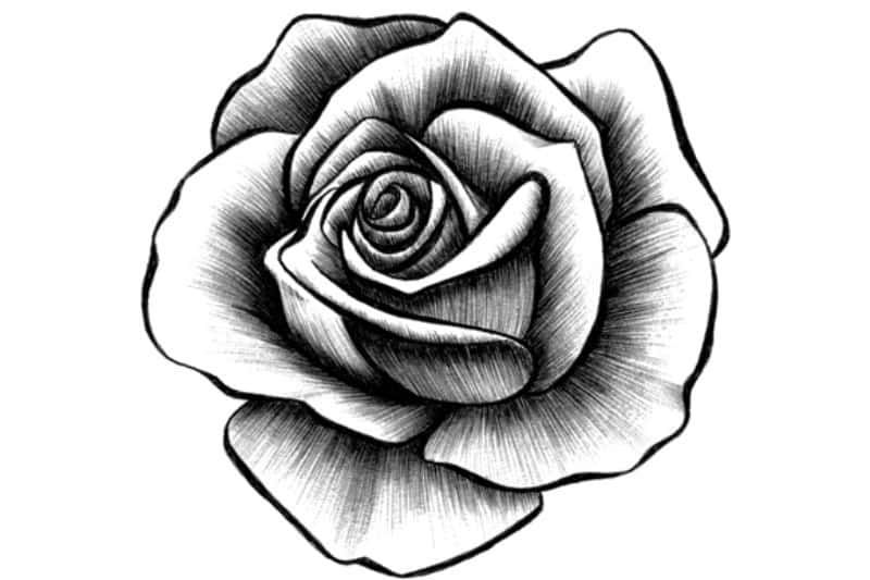 Paling Keren 28 Gambar Bunga Mawar Untuk Diwarnai Di 2020 Dengan