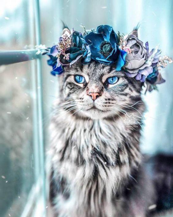 Photo of Katzenwettbewerb – Monatlicher Fotowettbewerb mit Preisen   – Hintergrundbilder …