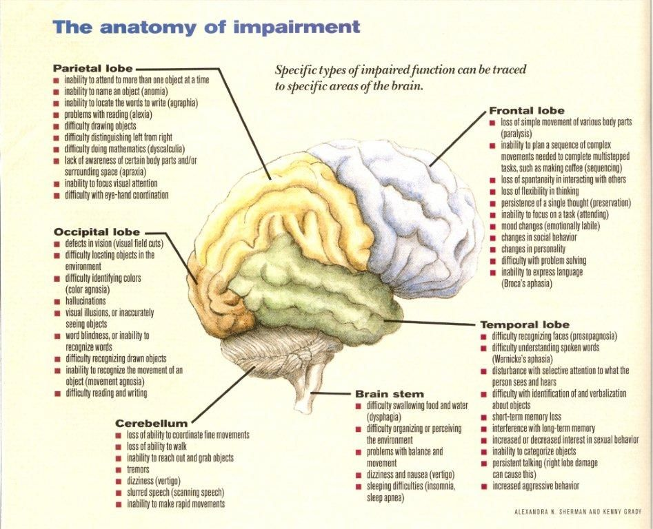 Brain Lobes Functions Cognitive Tasks And Info Brain Brain