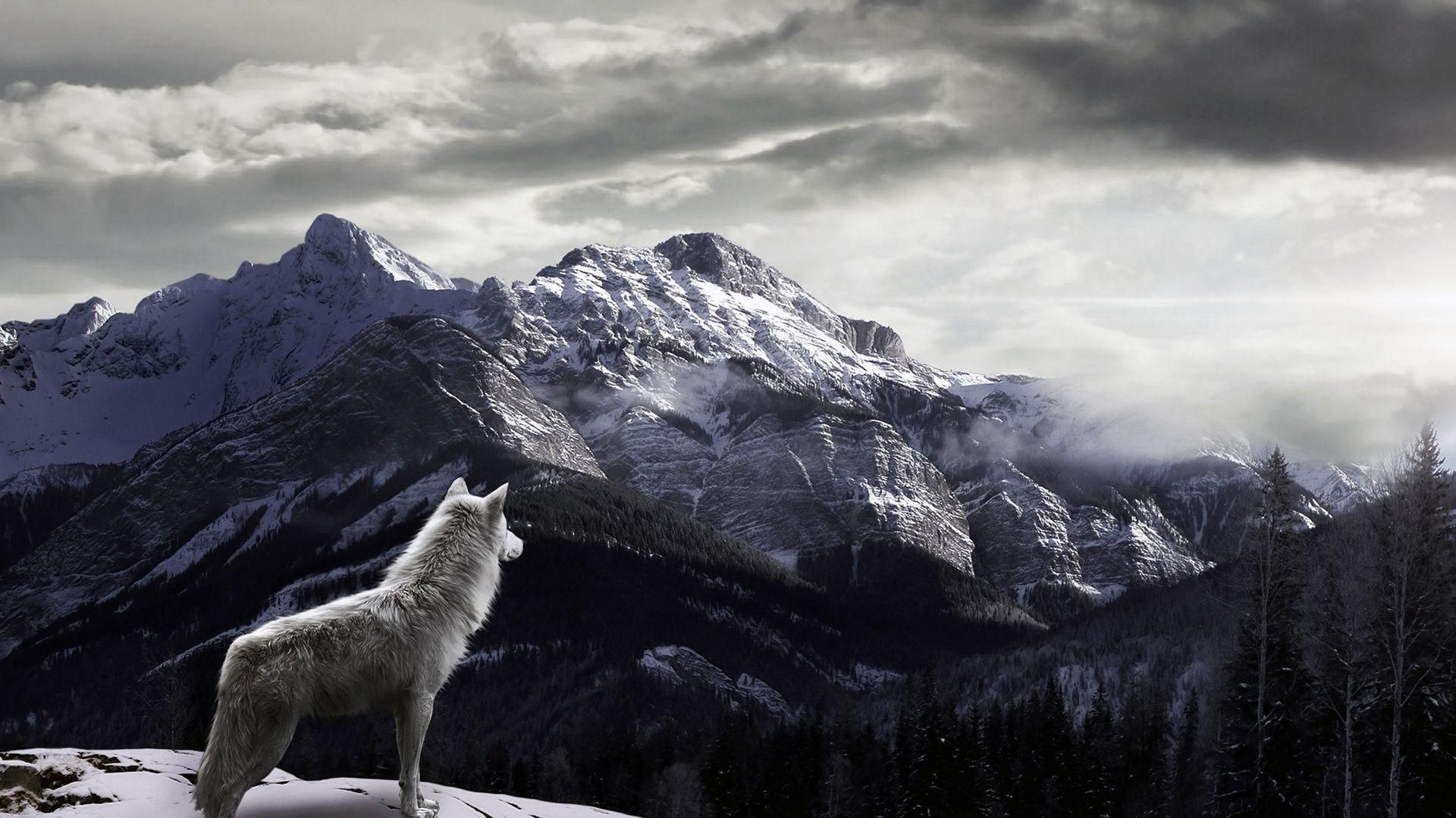 White Wolf Mountain Wallpaper Hd Wolf Wallpaper Winter Wolves