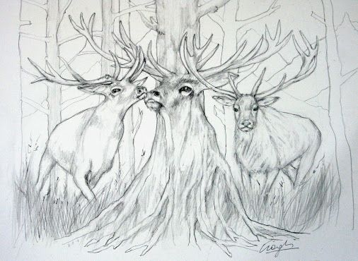 Tiziana ciaghi google · drawing sketchespencil drawingsgoogledrawings