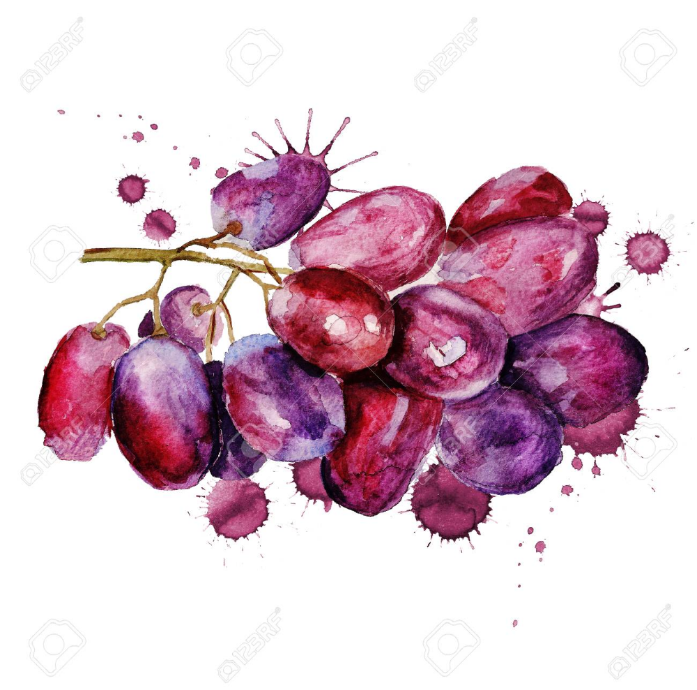 grapes watercolor Google Search Grape painting