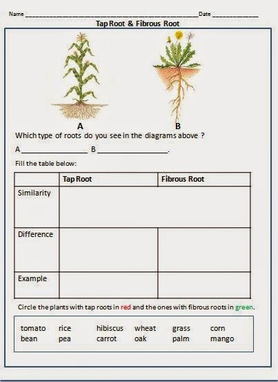 types of roots science ideas parts of a plant plants 1st grade worksheets. Black Bedroom Furniture Sets. Home Design Ideas