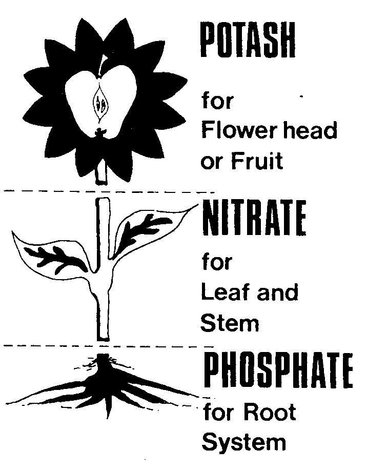 What is Hydroponics - Hydrodaze cornwall Uk http://www.ces.ncsu.edu/depts/hort/consumer/quickref/fertilizer/nutri_def.html  has more good info - no pics  http://www.landscape-and-garden.com/garden-soil/applying-fertilizer.aspx and here:  Leaves and shoots    Nitrogen: legumes, lightning Stems and roots        Phosphorus: bone meal,  Flowers and fruit       Potassium: kelp meal, ashes,                                           ground sea shells