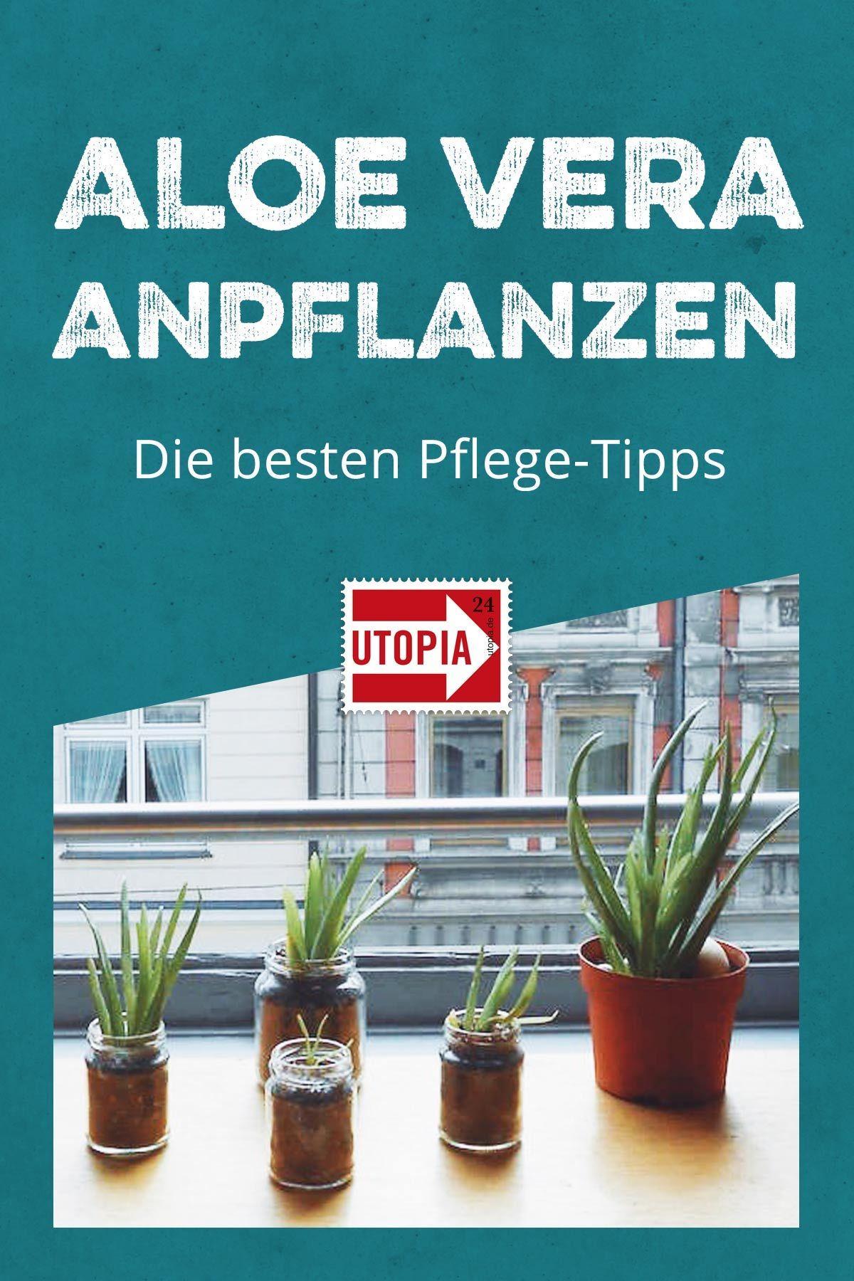 Aloe Vera anpflanzen: die besten Pflege-Tipps - Utopia.de