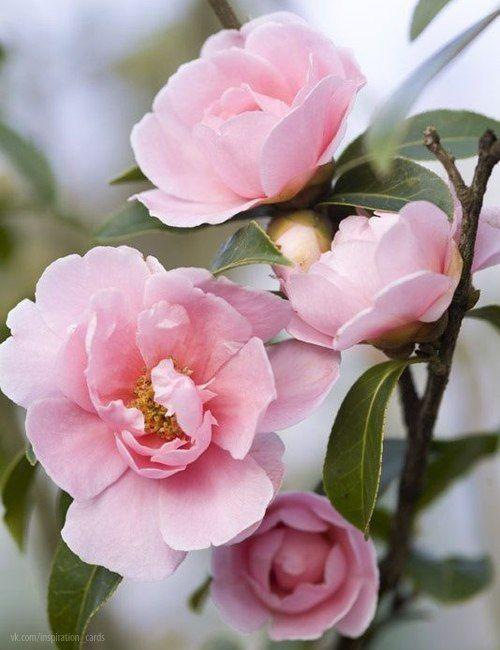 Фактура. крупным планом. | Цветоводство, Красивые цветы, Цветы