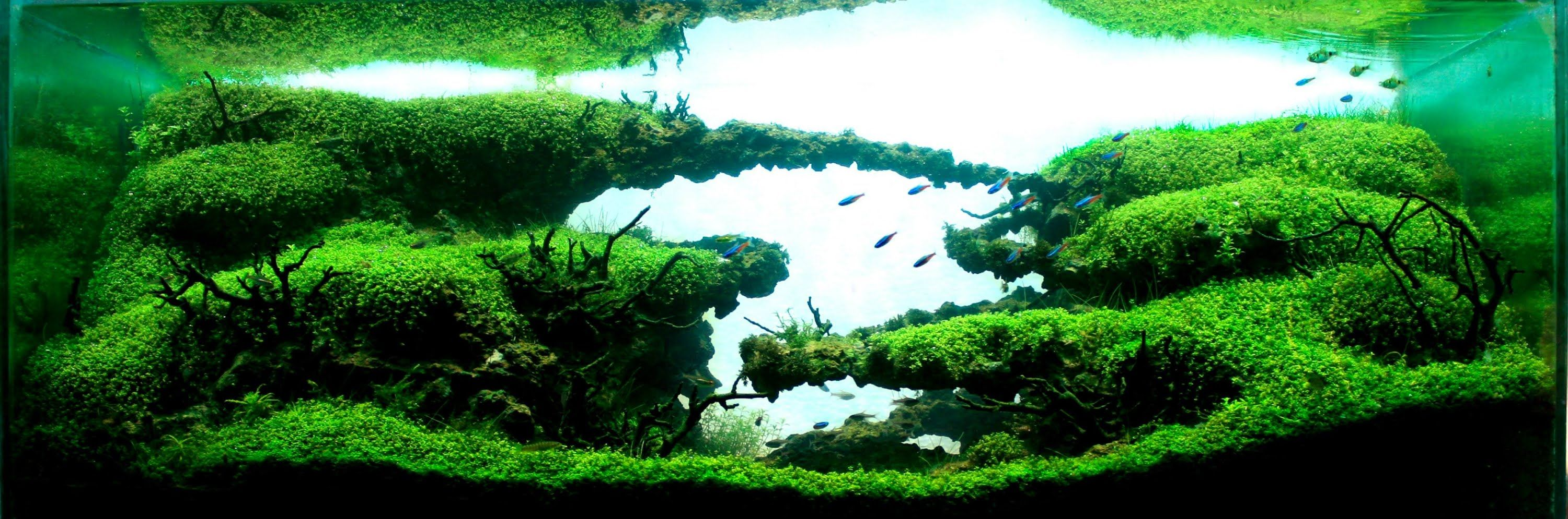 Lovely Panoramic The Construction Of This Aquascapes Builds Up Towards The  Back And The Planting Is Perfect For Scale Making It Look Like It Could Go  On ...