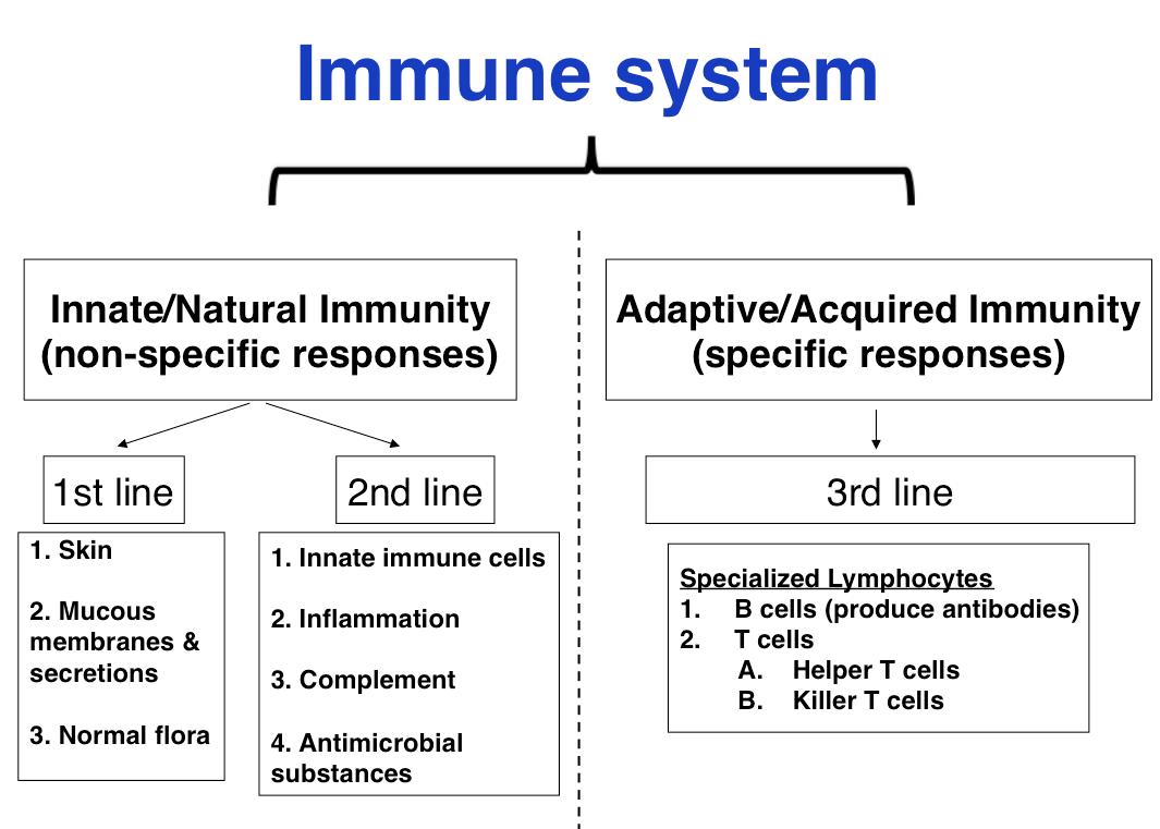 innate immune system - Google-haku | Immunologia | Pinterest