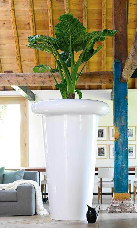 Alocasia Hydrokultur Pflanze in gigantischem Pflanzgefäß Jupiter von fleur ami. Hydrokulturen für die Bürogestaltung, Bürobegrünung von grüneräume Raumbegrünung Stoll.