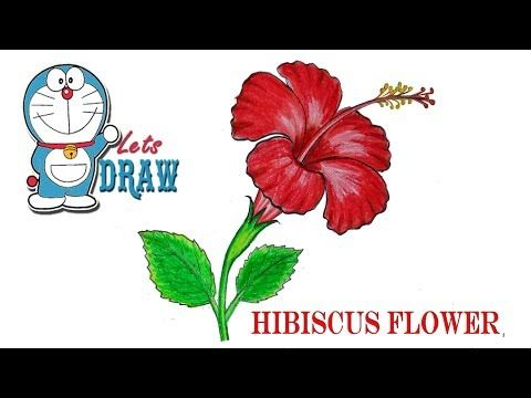 How To Draw A Hibiscus Flower Step By Step Very Easy Youtube Hibiscus Flower Drawing Simple Flower Drawing Flower Drawing