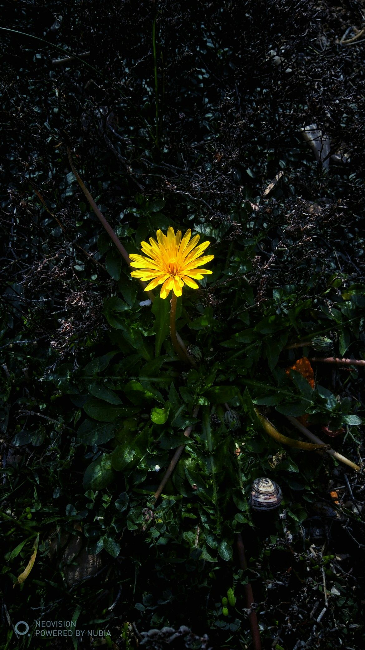 Cyprus Plants Flowers Photography