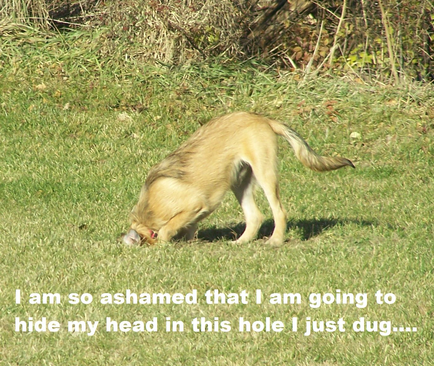 Jake Hole Cropped With Text Dog Shaming I Love Dogs Ostrich