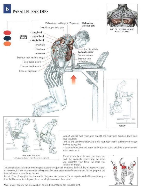 ANATOMY OF A WORKOUT - CHEST Workout - #workouts for #men | Anatomie ...