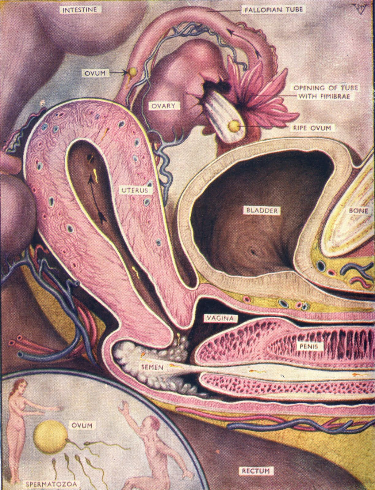 Conception | Fertility | Pinterest | Birth, Midwifery and Illustrations