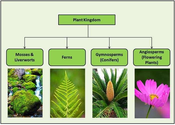 Plant Kingdom Classifications Plant Classification Plants Plant Lessons