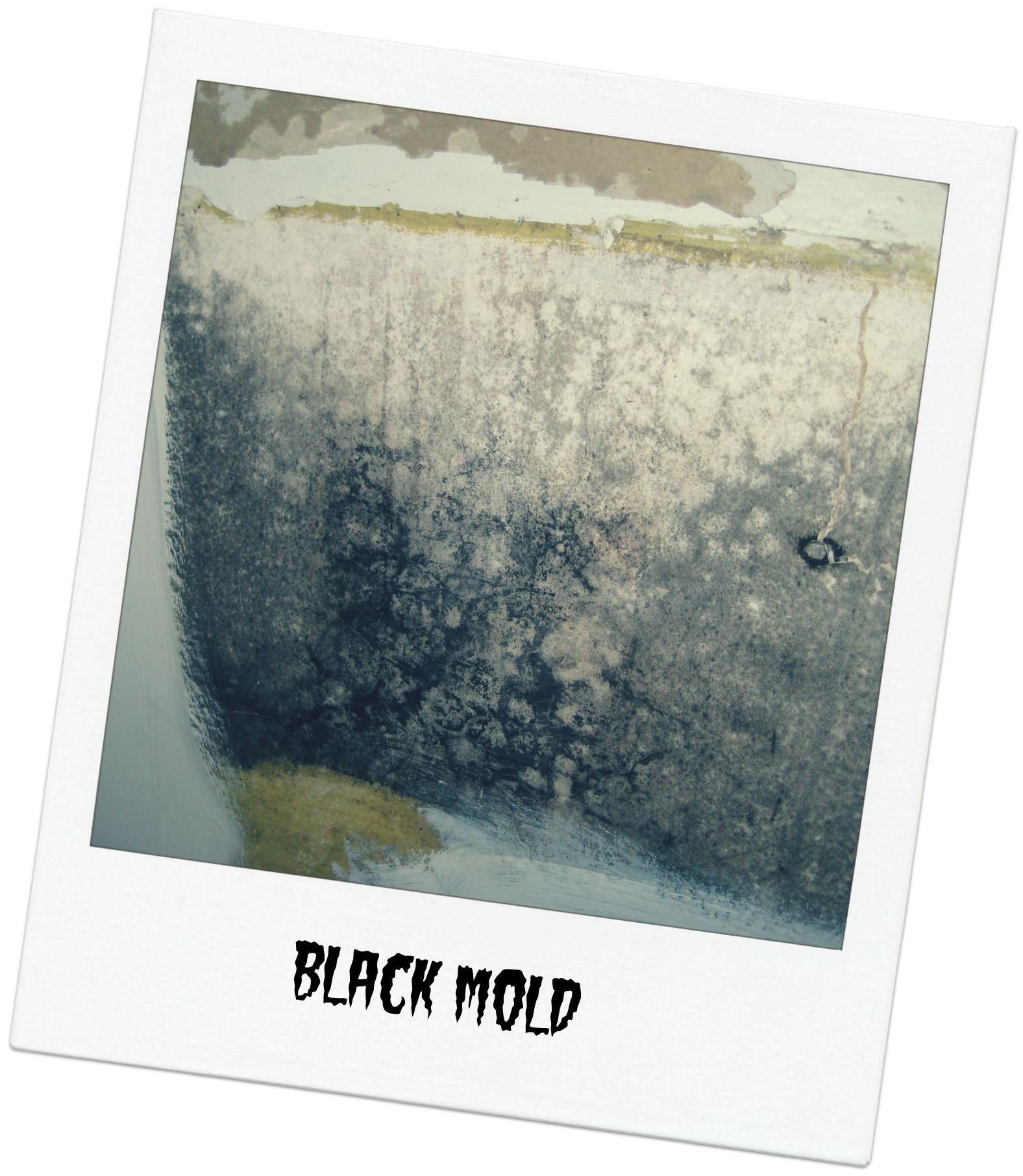 How can you tell if you have black mold  Here you see black mold in an image drawn straight from our photo